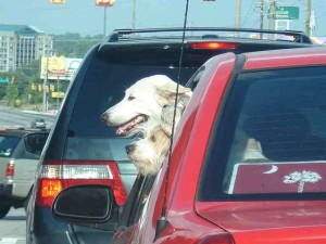 make sure that your pet is suitably restrained in your car otherwise your car insurance comapny may not pay out in the evnt of a claim if it was felt that your pet was partly responsible for the accident